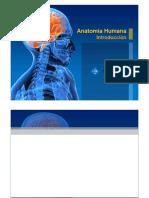 anatomia humana.docx