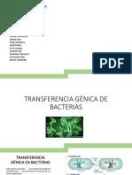 Transferencia-génica-de-bacterias