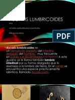 ASCARIS LUMBRICOIDES.pptx