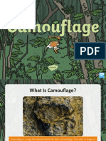 camouflage adaptation stem powerpoint