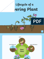 t-t-2547035-the-lifecycle-of-a-flowering-plant-powerpoint ver 1