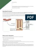 Absorption in the Large Intestine - Regulation - TeachMePhysiologyTeachMePhysiology