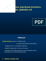 celladhesion_