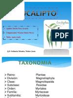 eucalipto.pptx