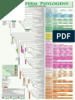 ZZZ Angiosperm Phylogeny
