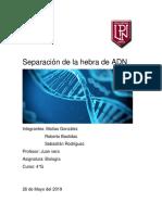 informe biologia.docx