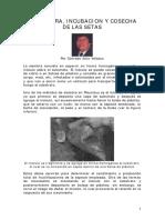 Agricultura - La siembra incubacion y cosecha de las setas - (Pleourotus)