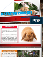 Razas de Conejo