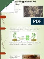 Uso de microorganismos en la agricultura.pptx