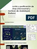Proteomica 1