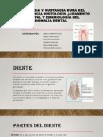 Morfologia-y-sustancia-dura-del-diente-enciaTERMINADO