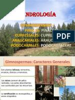 11. GIMNOSPERMAS -.pdf