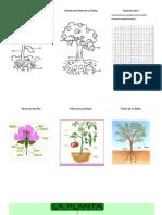 guia- Nombra las Partes de una planta.docx