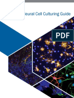 Neural Cell Culturing Guide