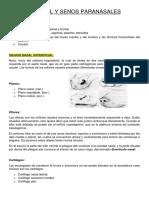 CAVIDAD NASAL Y SENOS PARANASALES resumen