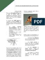LAS CUCARACHAS (lectura)