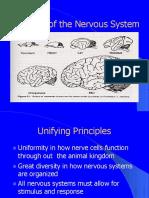 Evolution of the Nervous System