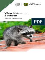 Waschbären in Sachsen
