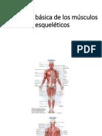 PRINCIPALES MÚSCULOS.pptx