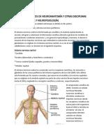 CONCEPTOS BÁSICOS DE NEUROANATOMÍA Y OTRAS DISCIPLINAS