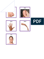 laminas partes del cuerpo