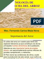 arroz2 (1)