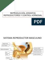 Reproducción, aparatos reproductores y control hormonal.pptx