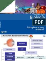 Clase 7 Fisiología muscular y ventilación 2016.ppt