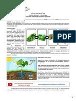 8-Biología-Guía-2-Sistemas-Vegetales-Ciencias-Naturales