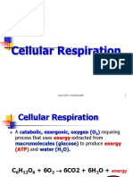 Cellular Respiration Ppt