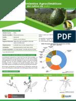 ficha-tecnica12-cultivo-palto.pdf