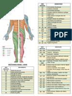 Resumo Nervos Espinhais - Pares Cranianos - Artérias - Veias - Dermatomos