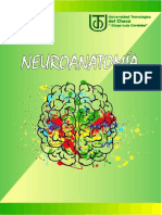 CONCEPTOS BÁSICOS DE NEUROANATOMÍA Y OTRAS DISCIPLINAS (1)