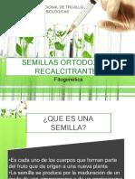 SEMILLAS ORTODOXAS Y RECALCITRANTES