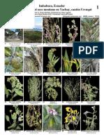 1135_ecuador_plants_yachay_dry_montane.pdf