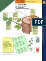 Guia de Actividades Para Imprimir Tejidos Vegetales- Word