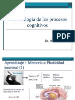 Psicobiología de los procesos cognitivos
