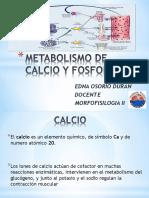 metabolismodecalcioyfosforo