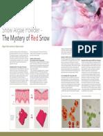 Snow-Algae-Powder Snow Algae Powder the Secret of Red Snow in-cosmetics Preview February 2014