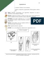 Familia Zygophyllaceae