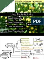 clase 6 Pteridofitas -Monilofitas- 2016.pdf