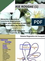 Clase 13-Rosidae I_ 2015