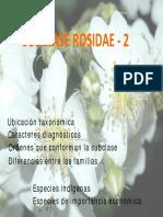 Rosidae