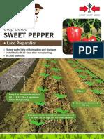 Sweet Pepper from Eastwest