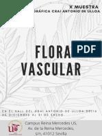 Flora Vascular