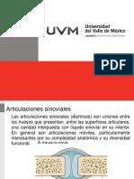 Articulaciones sinovialesv2