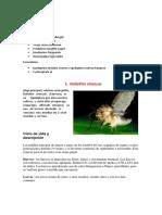 Plagas en esparrago (2)