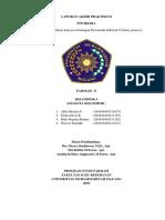 Laporan praktikum fitokimia Flavonoida