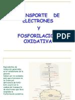 15. CADENA DE TRANSPORTE ELECTRONICO Y FOSFORILACION OXIDATIVA