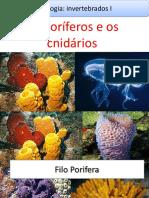 Aula Zoologia - Poríferos e cnidários.ppt
